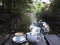 high teas forest
